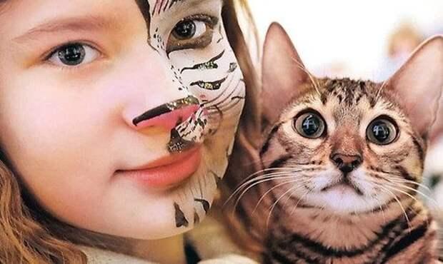 Способности кошек: правда и мифы