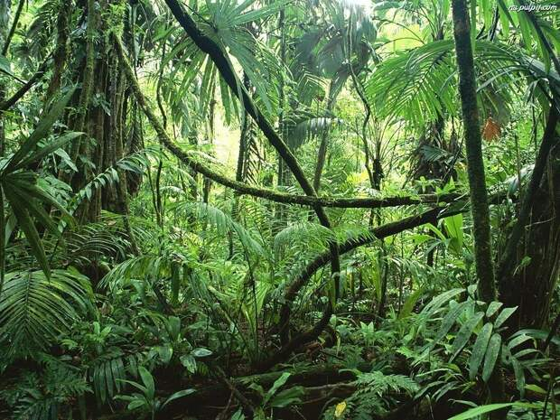 Amazonas12 Большое фотопутешествие по лесам Амазонки