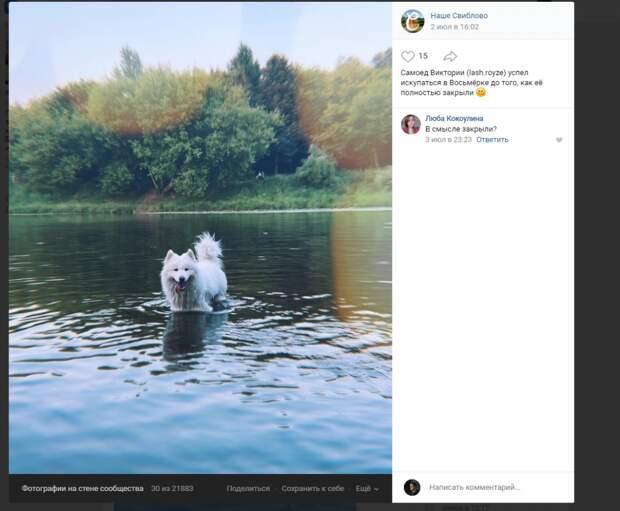 Фото дня: четвероногий житель Свиблова устроил заплыв в пруду «восьмёрка»