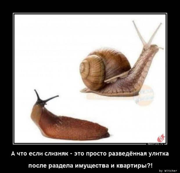 5402287_1614931414_demy34 (640x617, 58Kb)