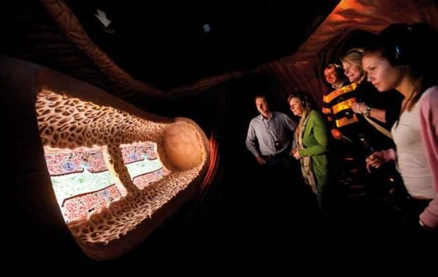 Прогулка внутрь человека: уникальный Музей человеческого тела в Нидерландах