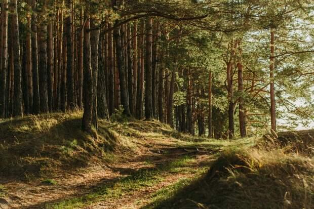 В Ижевске продлили запрет на посещение городских лесов