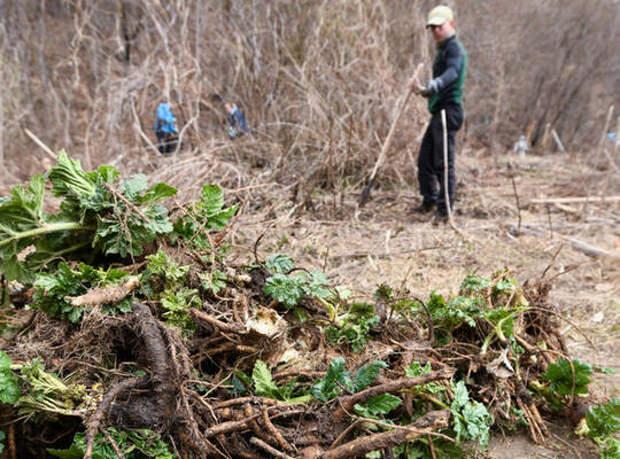 Одной лопаты мало: в Казани готовят акцию по борьбе с борщевиком