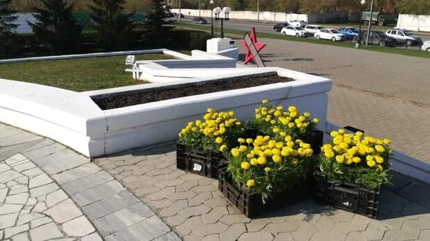 Благоухающий город. Омские парки искверы украсят десятки тысяч цветов