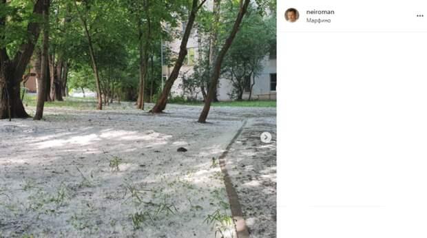Фото дня: тополиный пух покрыл траву в Марфине