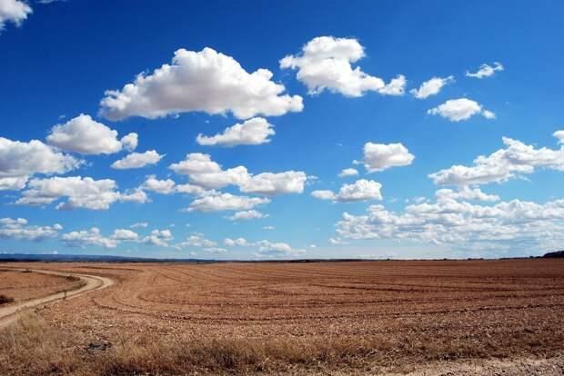 Менее 1% посевных площадей застраховали аграрии Удмуртии