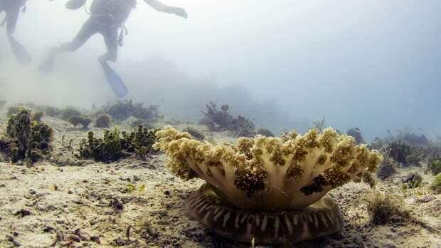 Медузы жалят на расстоянии