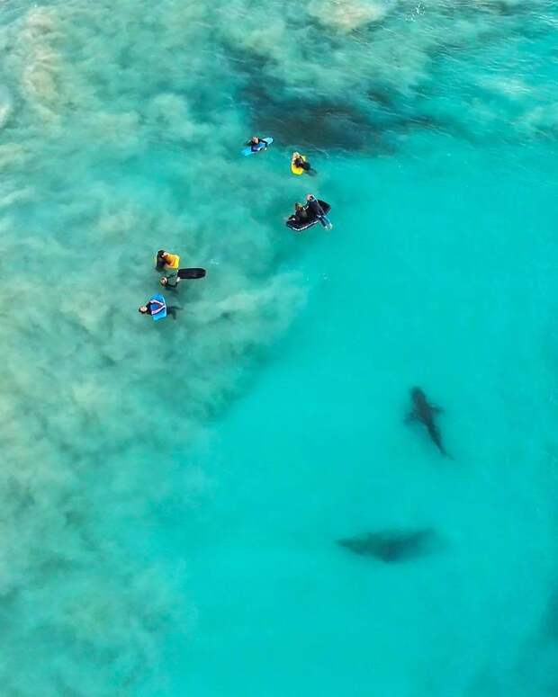 Отважный фотограф сделал невероятные снимки акул в волнах