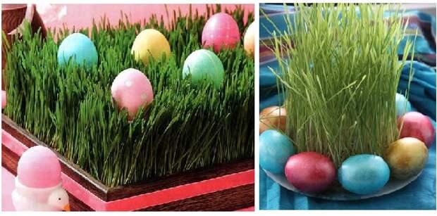 идея для пасхи: яйца в пророщей траве