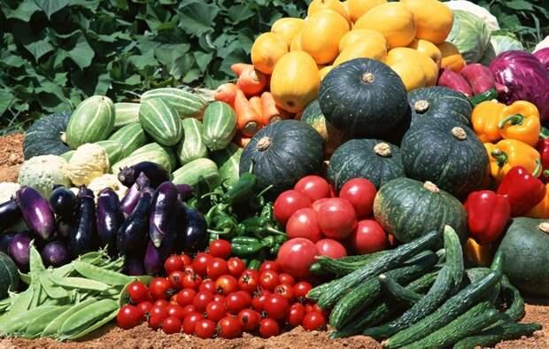 Пакетированные семена овощей и цветов