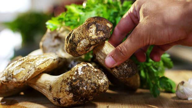 В Минприроды не подтвердили информацию об ужесточении правил сбора грибов и ягод