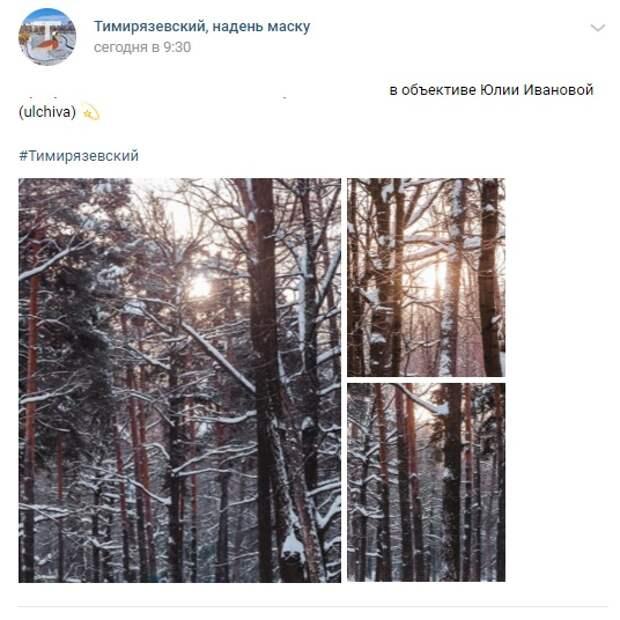 Фото дня: величественный Тимирязевский лес