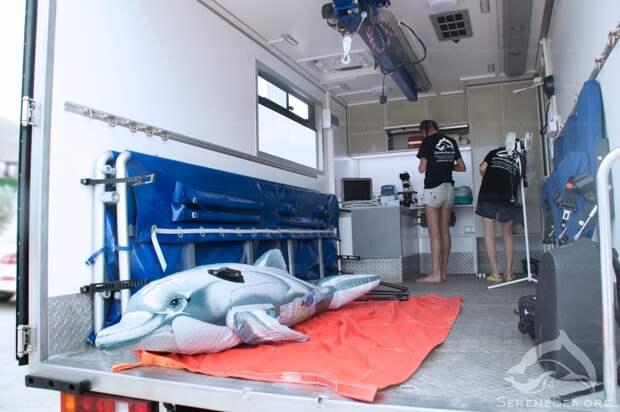 «Скорая помощь» для дельфинов появилась в Крыму