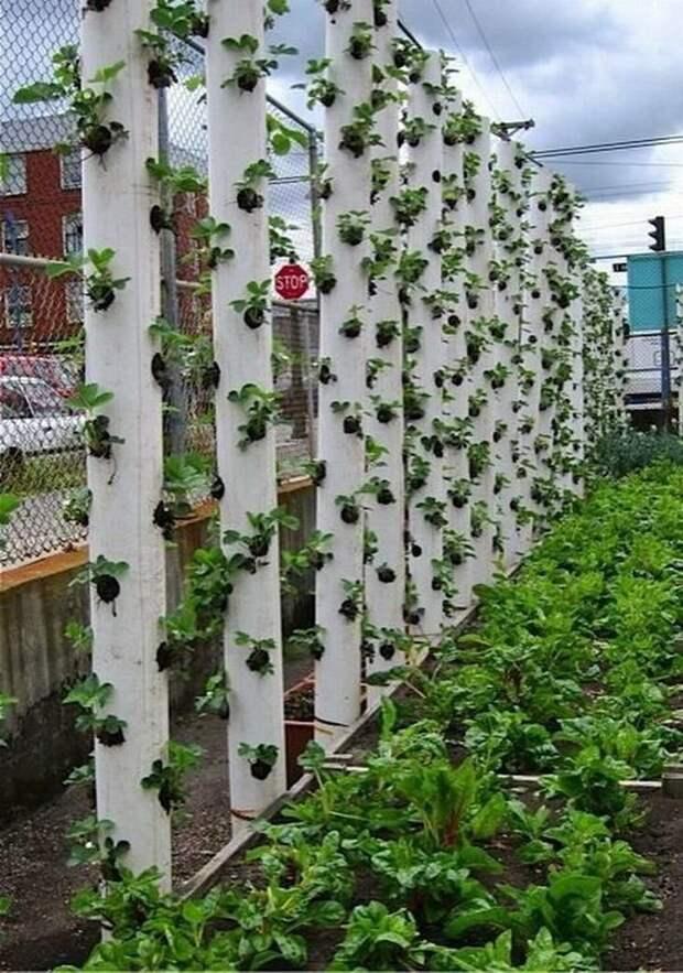 Вертикальная грядка из пластиковой трубы дача, клубника, на заметку, огород, сбор урожая, фото