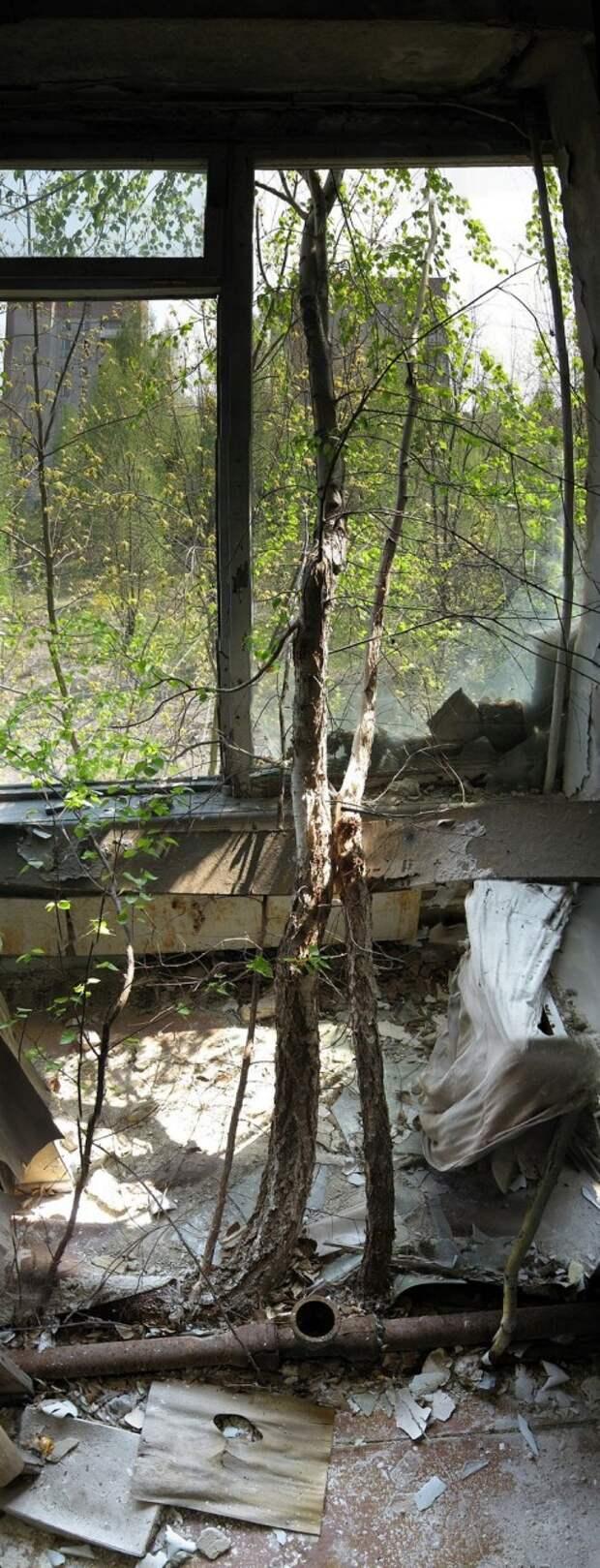 chnpp15 Оживающий Чернобыль