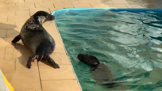 Краснокнижных тюленей готовят к возвращению в дикую природу в Петербурге