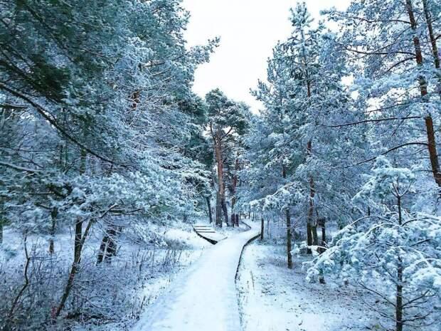 Фото дня: пейзаж в Серебряном Бору