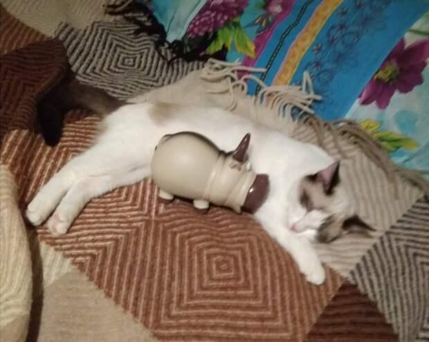 Когда котёнок надоел, его выставили в подъезд. В судьбу крохи вмешалась девушка