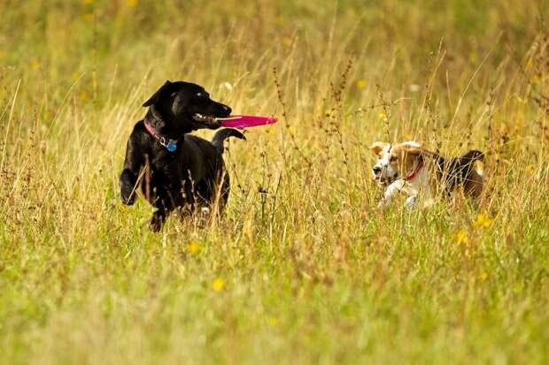 Игра — неотъемлемая часть гармоничного развития собаки, во время которой они усваивают новые навыки и закрепляют нужные команды