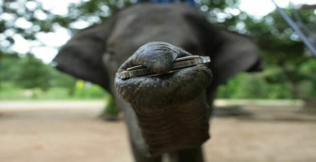 В Индии появился музыкальный слон