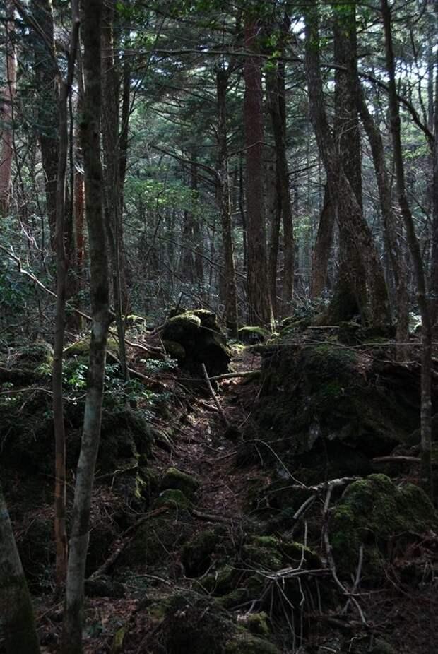 forests43 Леса с другой планеты!