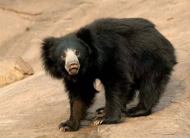 Медведи крупные и не очень