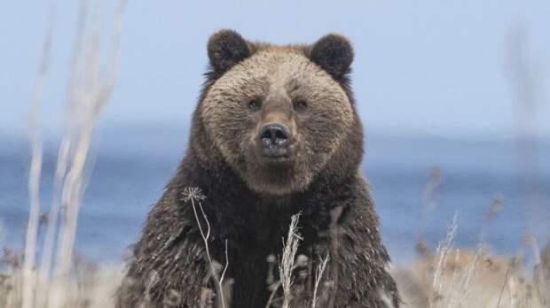 Медведь вскрыл могилу и разбил гроб на сахалинском кладбище