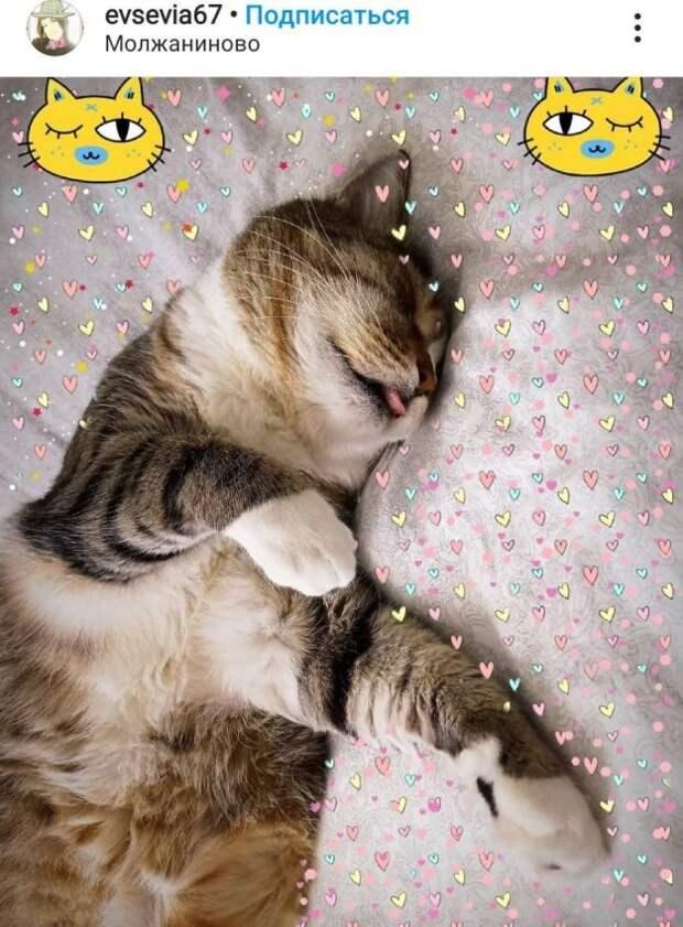 Фото дня: грациозный сон кота