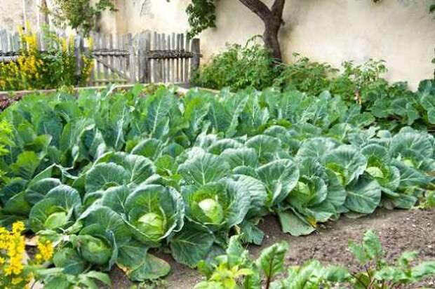 в саду и огороде в октябре