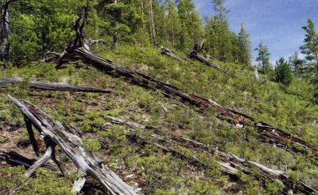 Вековые деревья вырывало с корнем. /Фото: argumentiru.com