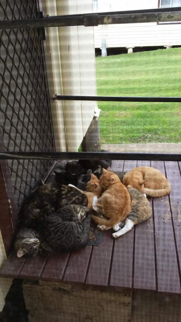 30 случаев, когда люди думали, что у них нет кота, но вот же он