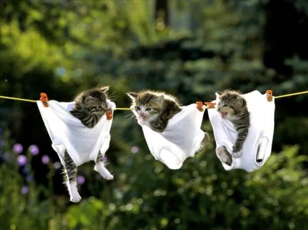 Кошки снижают уровень холестерина