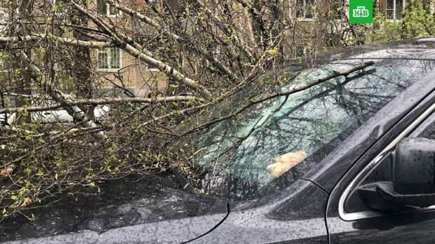 Порывистый ветер в Москве повалил 56 деревьев и повредил 44 машины