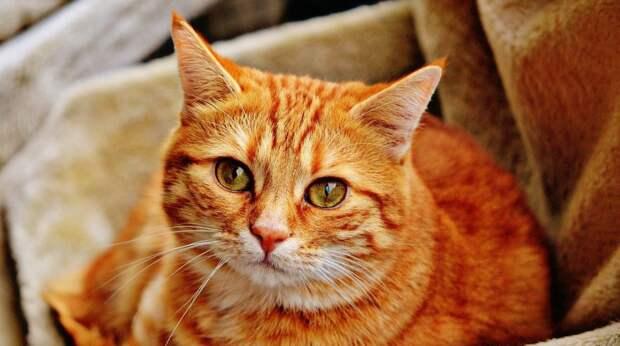 Страшно, очень страшно: почему кошки боятся пылесоса