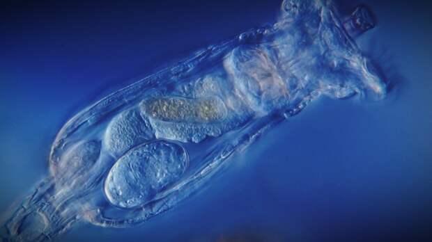 Ученые оживили замороженных 24 тысячи лет назад червей