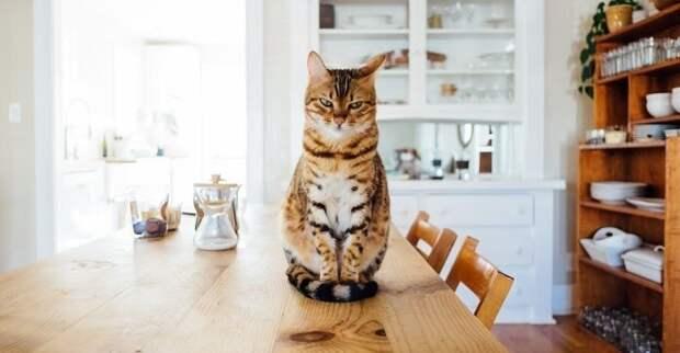 А бедного Васю хозяева выперли на кухню...