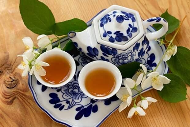 Назван рекомендованный объем зеленого чая в день