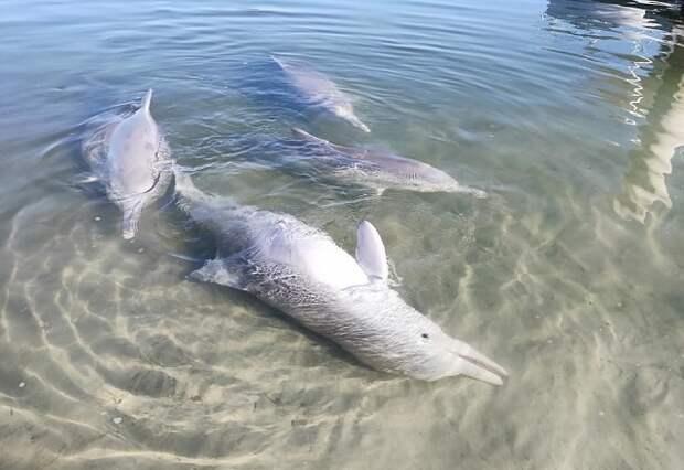 Мистик — дельфин-кладоискатель из Австралии.