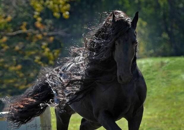 Фридрих — самый красивый конь в мире