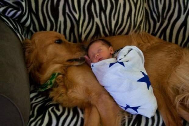 дети должны расти с домашними животными (19)