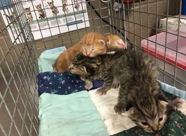 Отчаявшись найти своих котят, мать пришла к дверям спасателей