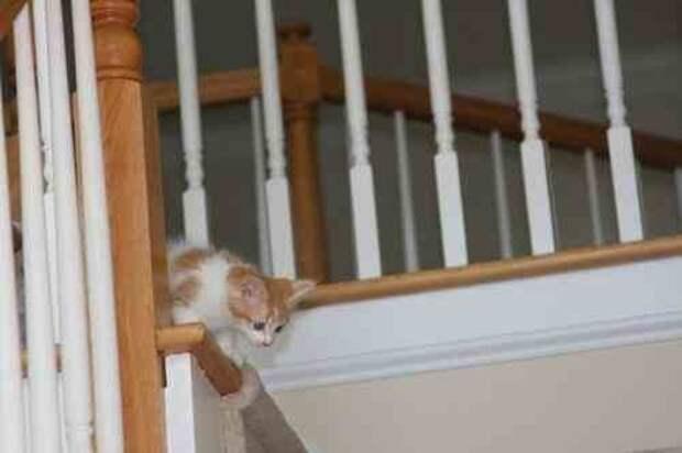 И снова лестница страх, юмор