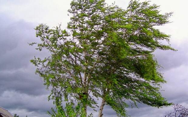 В Рязанской области в выходные сохранится сильный ветер