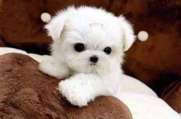 Эти щенята такие милые!