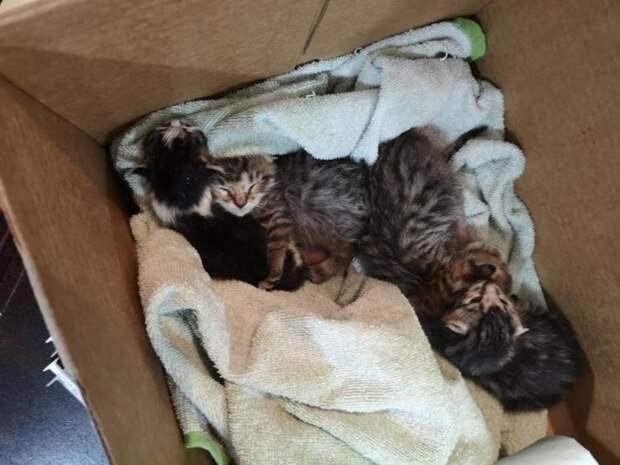 Осиротевшие котятки из разных пометов объединились, чтобы выжить