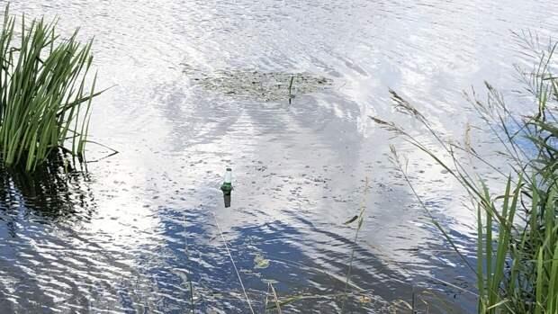 В Красноярске на Теплой речке обнаружили масляное пятно