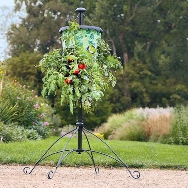 Огород вверх тормашками или выращивание растений в перевернутом виде.