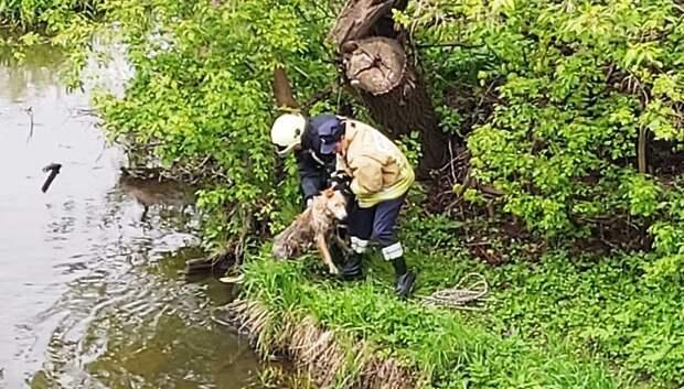 Спасатели вытащили из реки в Подольске собаку, которая не могла сама выбраться