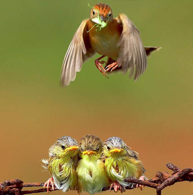 22.  красота, природа, птицы, фото