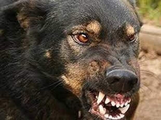 Если нападает собака